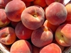 Redhaven Peach-Prunus persica USDA Zones 5-8  Chill:  400 hrs