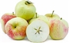 Apple Tree MOLLIES DELICIOUS--Malus domestica Zones 4 Chill: 400 hrs