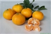 Temporarily out of stock ORANGE OKITSU SATSUMA MANDARIN TREE- Citrus unshiu 'Okitsu' Zone:  9a
