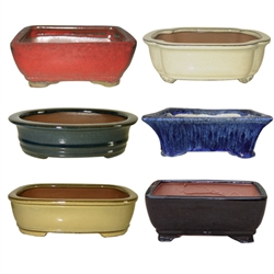 "BONSAI POT ASSORTMENT 12"" MULTICOLORS"