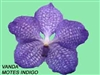 T-4863 Montes Indigo' Vanda-Purple bloom Tropical Z 9+