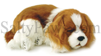 Cavalier King Charles Spaniel Perfect Petzzz SaltyPaws.com