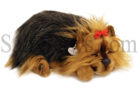Yorkshire Terrier Perfect Petzzz SaltyPaws.com