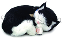 Cat Shorthair Black & White Perfect Petzzz SaltyPaws.com