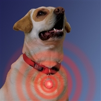 Collar LED Safety Light SaltyPaws.com