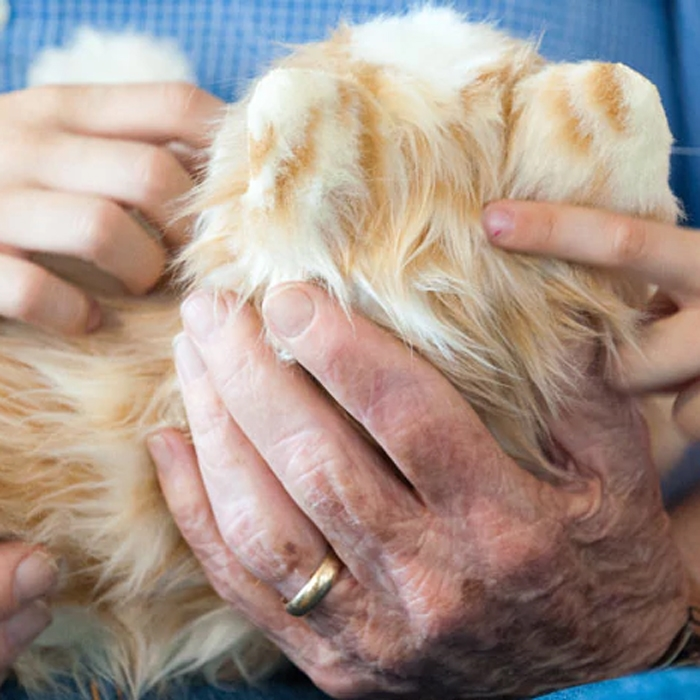 Joy For All Companion Animated Therapy Pets