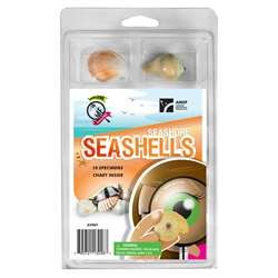 Explore With Me Seashore Seashells, AEP2967