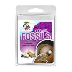 Explore With Me Oceanic Fossils, AEP2968