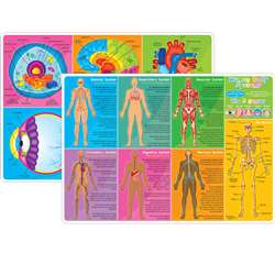 10Pk Human Body Learn Mat 2 Sided Write On Wipe Of, ASH95619