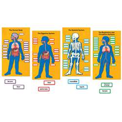 Human Body Bulletin Board Set By Carson Dellosa
