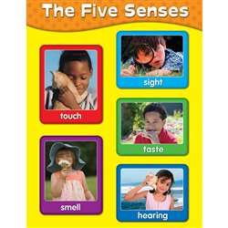 Chartlets The Five Senses By Carson Dellosa