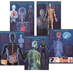 Human Body Facts Bulletin Board Set By Carson Dellosa