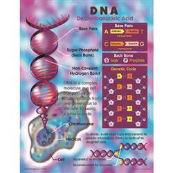 Dna Chartlet By Carson Dellosa