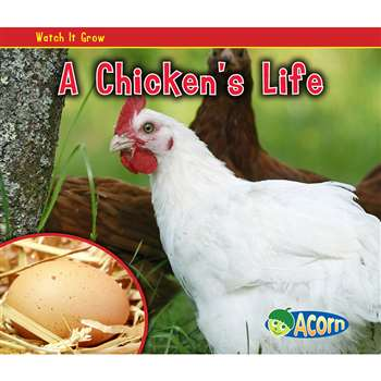 A Chickens Life By Coughlan Publishing Capstone Publishing