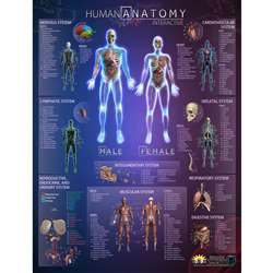 Human Anatomy Interact Smart Chart, IEPIHACB