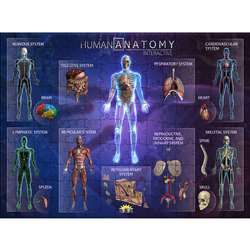 Human Anatomy Interact Smart Puzzle, IEPPZHA