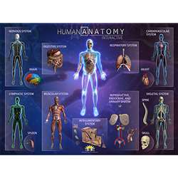 Human Anatomy Smart Mats Set Of 4, IEPSMHA