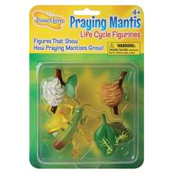 Mantis Life Cycle Stages By Insect Lore