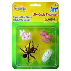 Ant Life Cycle Stages By Insect Lore