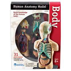Model Human Body Anatomy By Learning Resources