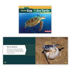 Start Finish Egg To Sea Turtle Bk, LPB1512418412