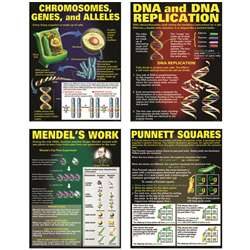 Dna & Heredity Poster Set By Mcdonald Publishing