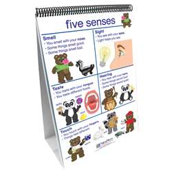 Flip Charts All About Me Early Childhood Science Readiness By New Path Learning