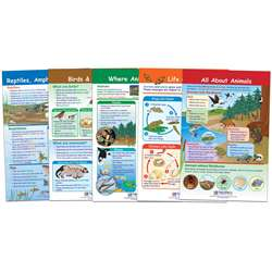 All About Animals Set Of 5, NP-941501