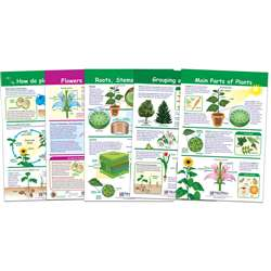 All About Plants Set Of 5, NP-943501
