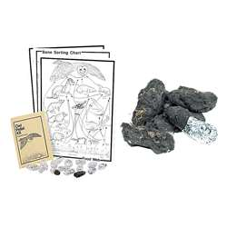 Owl Pellet Kit Classroom Kit By Pellets