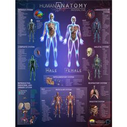 Human Anatomy Interactve Wall Chart With Free App, RWPWC03