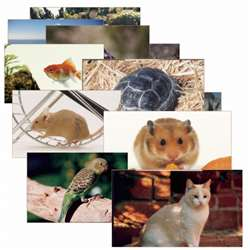 Pets 14 Poster Cards By Stages Learning Materials