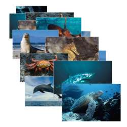 Sea Life 14 Poster Cards By Stages Learning Materials