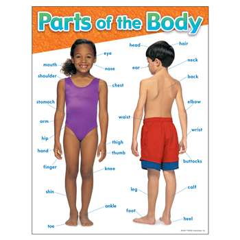 Chart Parts Of The Body By Trend Enterprises