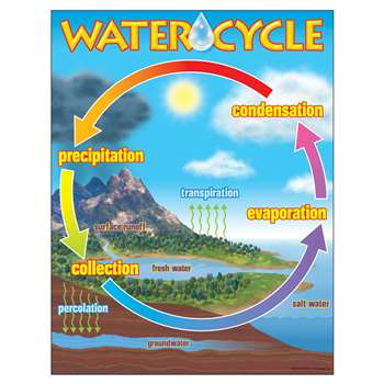 Chart The Water Cycle By Trend Enterprises