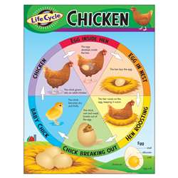 Chart Life Cycle Of A Chicken By Trend Enterprises