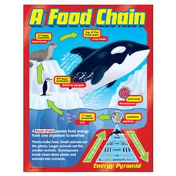 Chart A Food Chain Grades 2-5 By Trend Enterprises