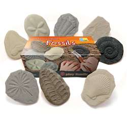 Play And Explore Fossils, YUS1041