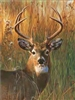 122 3D Lenticular Picture Deer, Buck