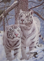 293 3D Lenticular Picture White Tigers