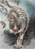 164 3d white tiger walking 2a2528