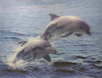179 3d 2 dolphins 2a2029