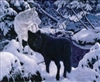 218 439  3d Black wolf in snow 2a2005