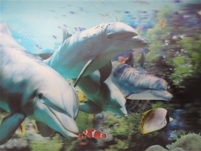 228 3d dolphins 2a2056