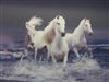 250 3d 3 white horses in water 2a2106