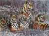 291 3D Lenticular Picture Tigers in Snow