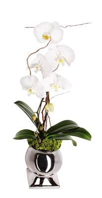 Orchid Grand (This container is temporarily unavailable a suitable substitution will be made)