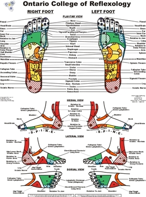 Extra Large Vinyl Foot Reflexology Chart