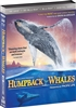Humpback Whales 4K & 3D (BD + Digital Copy)