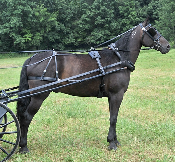 Amish made driving harness for all sizes from Mini's to Drafts. Made